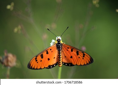 an orange butterfly enjoying the leftovers at the end of the blooming season