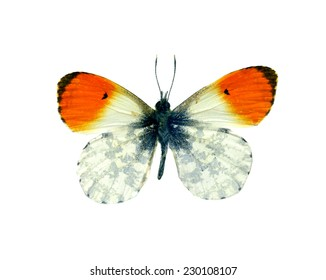 orange  butterfly isolated, set of realistic amazing tropical butterflies and alive  bug , zoology,wild ,entomology, beautiful wing collection ,insect animal stuff icon