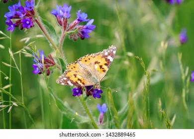 Orange butterfly on a blue flower