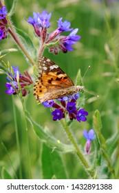 Orange butterfly on a blue flower. Vertical photo