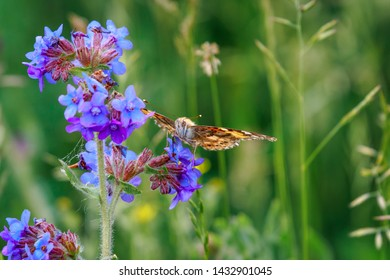 Orange  butterfly on a blue flower sipping nectar on a summer day