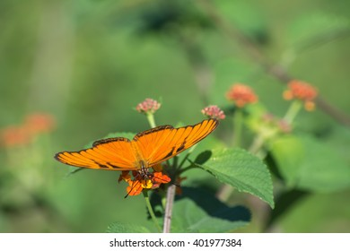 Orange butterfly on orange flower is eating