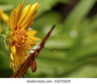 Orange butterfly on a flower in sunlight