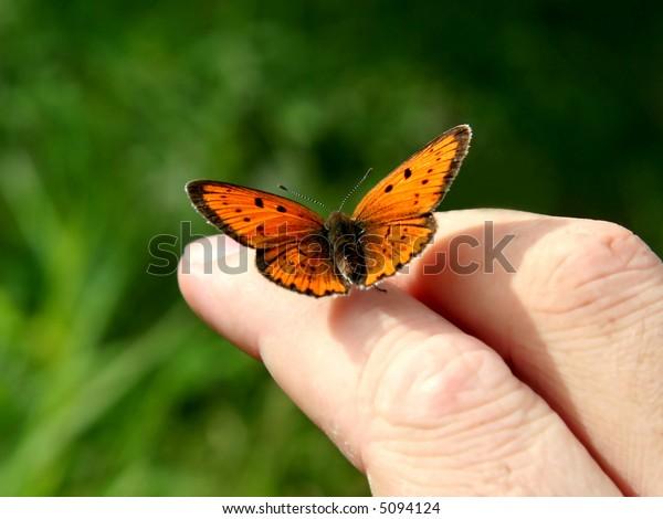 Orange butterfly on human hand.