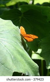 Orange Butterfly on leaf