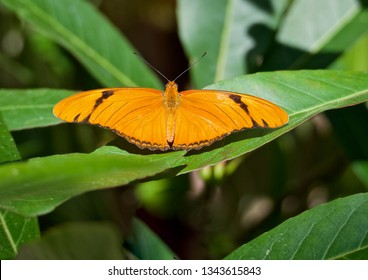 An Orange Butterfly Resting on a Green Leaf