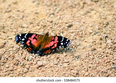 Orange butterfly in the sand ground