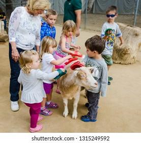 Orange, CA / USA - 11-10-2014: Children brush a goat in the petting zoo at the Orange County Zoo in Orange, CA.