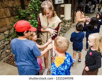 Orange, CA / USA - 11-10-2014: Educator introduces children to a snake at Orange County Zoo.