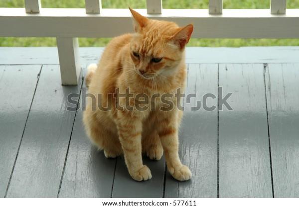 Orange Calico Cat Soft Focus Stock Photo (Edit Now) 577611