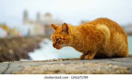 Orange Cat by the Sea