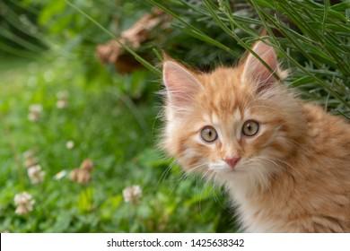 Orange cat in garden