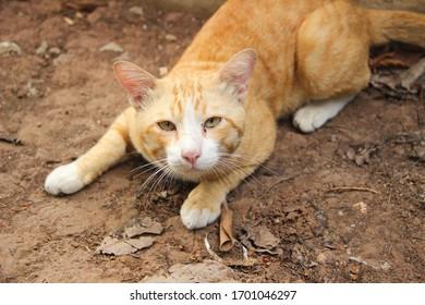 The orange cat lay flat on the ground.