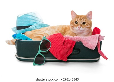 Orange cat lay on a suitcase full assembled for a holiday trip, isolated on white