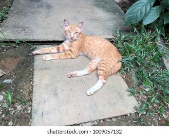 Orange cat rest and relax