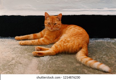 orange-cat-resting-near-wall-260nw-12148