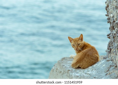 orange-cat-rests-watches-on-260nw-115145