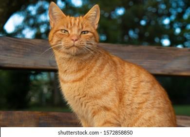 an orange cat sitting in a garden.
