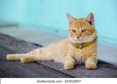 Orange cat sleeping on a wooden floor.