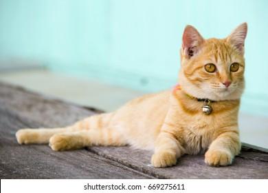 Orange cat sleeping on a wooden floor, thailand.