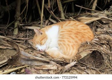 Orange cat sleeping in the wild