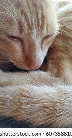 Orange cat sleepy,a cat drowse close up head and tail fur,fluffy tail