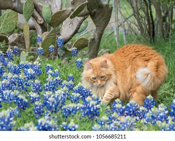 Orange Cat with Texas Bluebonnets