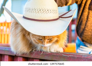 Orange cat wearing a cowboy hat