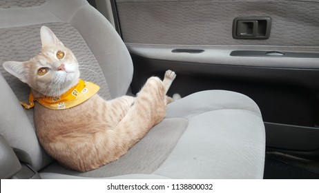a orange cat wearing fabric collar is inside a car.A cat is sitting in a car seat.