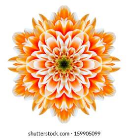 Orange Chrysanthemum Mandala Flower Kaleidoscope Isolated on White Background