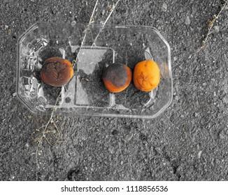 Orange citrus fruit rotting on ground