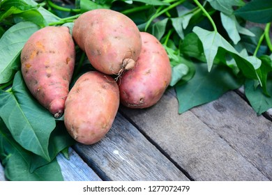 Orange color sweet potatoes on a wooden table top with sweet potato's leaves.