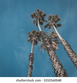 Orange country California palm trees with beautiful blue skies.