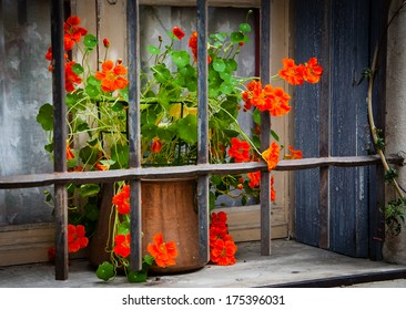 Orange curly flowers in copper pot placed behind the rusty lattice on a grungy sill of the stone house. Closed window with lace curtain and wooden shutters. (Arles, Provence, France) Shadowed angles.