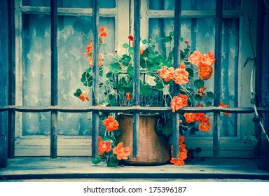 Orange curly flowers in copper pot placed behind the rusty lattice on a grungy sill of the stone house. Closed window with lace curtain and wooden shutters. (Arles, Provence, France) Toned image.