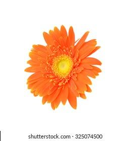 Orange daisy leafs macro view
