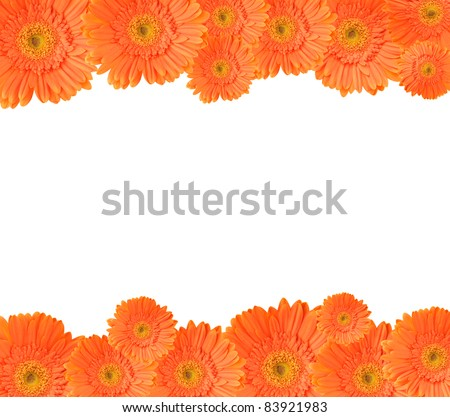 Orange Daisygerbera Flowers Create Frame On Stock Photo (Edit Now ...
