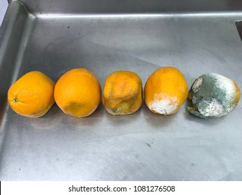 Orange decomposition process rotten orange