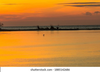Orange is the dominant colour of this sunrise, and a silhouette of a lone bird can be seen on the ice