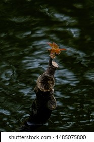 A orange dragonfly resting on a partially submerged tree branch , waters are dark and sinister looking and could be dangerous.