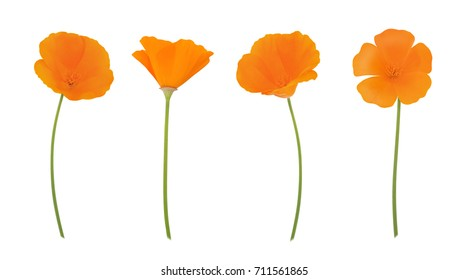 Orange eschscholzia set isolated on a white. Full depth of field.