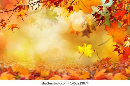 orangefarbene Herbstblätter, natürlicher Hintergrund