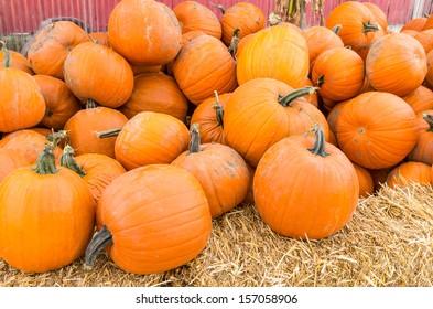 Orange fall pumpkins at the farmers market