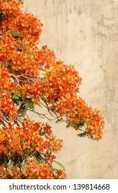 Orange Floral