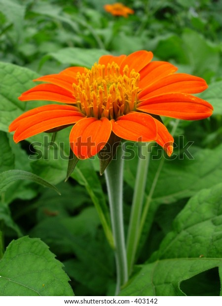 orange flower against the green