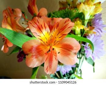 Orange Alstroemeriain a flower arrangement