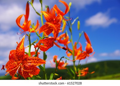 Orange flower and blue sky and white cloud
