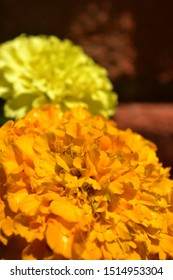orange flower in the foreground with a yellow flower in the background