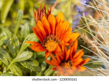 an orange flower, green plants and white dried grass mixed into each other.