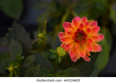 Orange flower macro